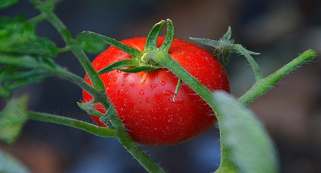 tomate 640x346